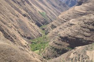 Francobolli di viticoltura eroica in un'aspra valle boliviana.